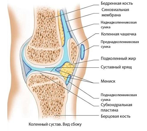 Подагра коленного сустава: симптомы и лечение