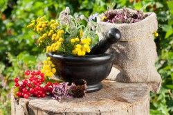 Лекарственный травы при лечении заболеваний суставов