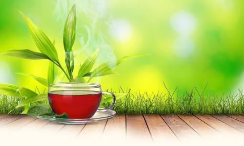 состав монастырского чая для похудения пропорции трав