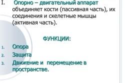 Определение и функции опорно-двигательного аппарата