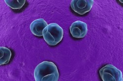 Заражение хламидиями - причина развития реактивного артрита