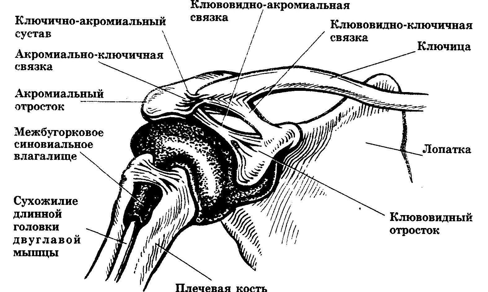 лечение артрозо артрит акромиоключичного сустава